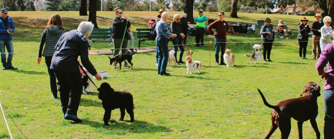 Dogs and owners undergoing training